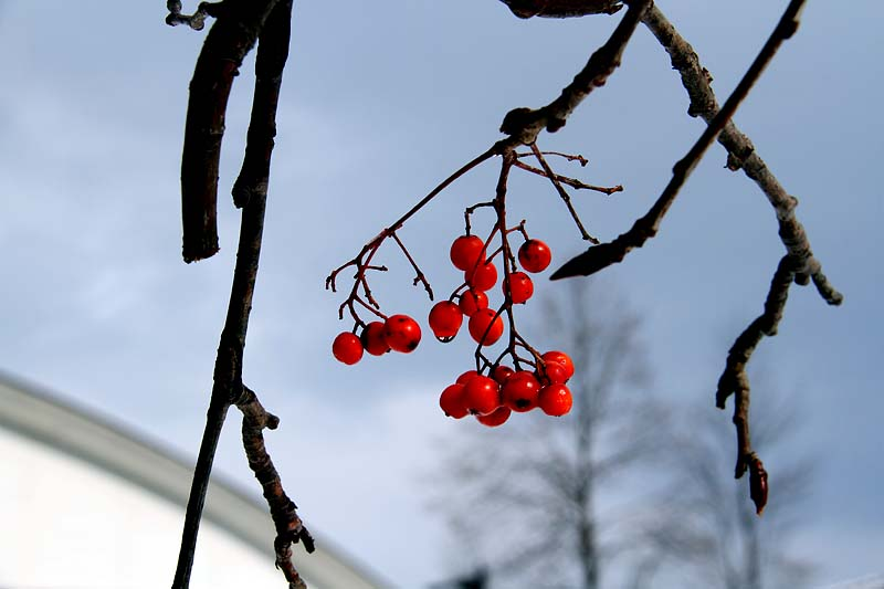 長ーい正月休みも終わりいよいよ平常な時間が流れ始めました。うれしい!