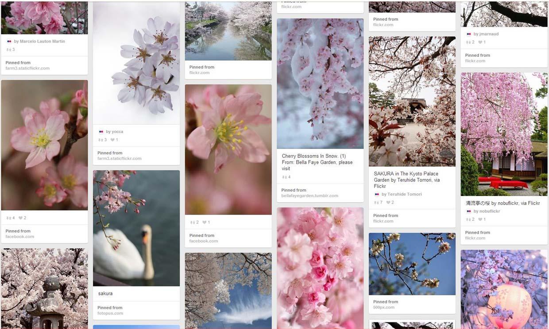 梅は咲いたか 桜はまだかいな。そろそろPinterestのボードに桜の花を集めたいと思います。